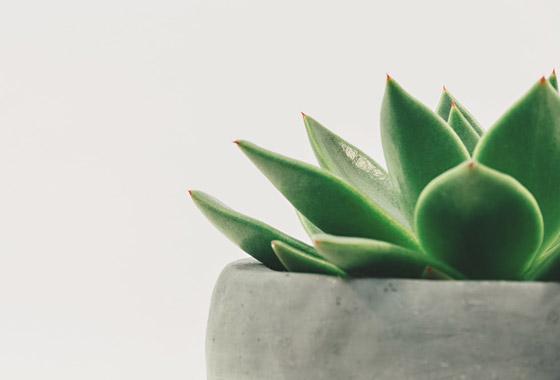 Viherkasvit -30 puutarhanikkarit